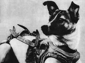 Remember [*https://en.wikipedia.org/wiki/Laika Laika]?
